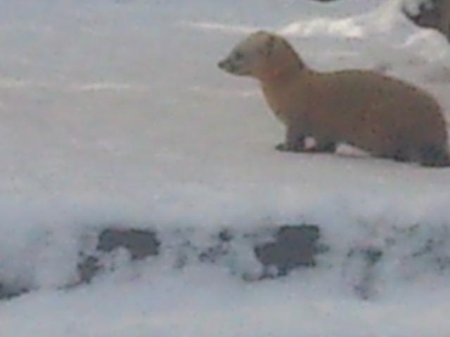 スノーマンキャンドル 大雪
